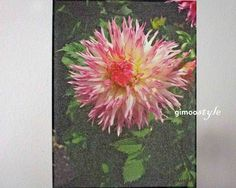 Weiteres - Dahlia rosa - ein Designerstück von gimoostyle bei DaWanda, Garten, FOTO von GIMOOTO, Motiv gedruckt auf Satin Canvas Leinwand