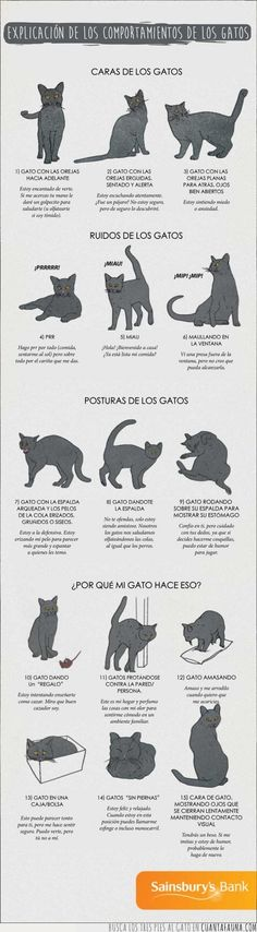 Cats Toys Ideas - Infographic about Cat Behaviours Explained - Most affectionate cat breeds ideas and inspirations - Ideal toys for small cats Crazy Cat Lady, Crazy Cats, Cute Cats, Funny Cats, Cats Funny Sayings, Adorable Kittens, Cat Body, Cat Info, Cat Behavior