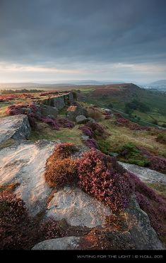 England Travel Inspiration - Heather in Derbyshire, UK England Ireland, England And Scotland, British Countryside, British Isles, Belle Photo, Great Britain, Beautiful Landscapes, The Great Outdoors, Wonders Of The World