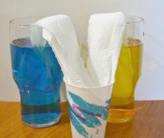 Color-mixing science experiment preschoolers