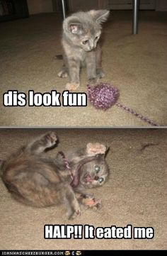 funny cat pictures - dis look fun