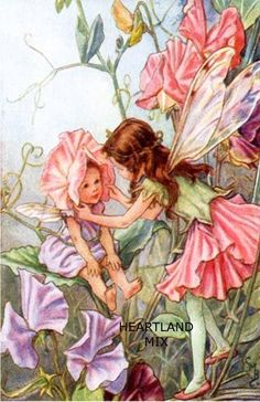 What are flower fairies? Associated with the paintings of English illustrator Cicely Mary Barker, flower fairy art and gardens . Cicely Mary Barker, Illustrator, Sweet Pea Flowers, Fairy Pictures, Vintage Fairies, Beautiful Fairies, Flower Fairies, Fairy Art, Fantasy Art