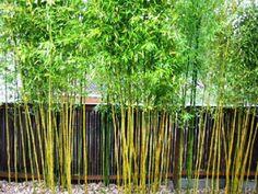 jardin avec des plantes de bambou
