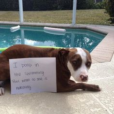 I poop in the swimming pool when no one is watching.