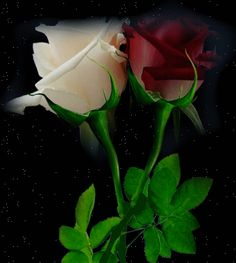 rose bouquet.gif - Rose glitter grafica glitter immagini fiori gif animate-Roses glitter graphics glitter flowers animated gif images Grafica glitter per i  vostri spazi web COPIA IL CODICE PER AGIUNGERE QUESTA IMMAGINE NEL TUO SPAZIO:            Rose