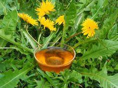 Løvetannsirup både ser ut som, lukter som og smaker som den fineste sommerdag. Her kommer smaken av løvetannblomster til sin rett. Chutney, Parsley, Preserves, Pesto, Jelly, Juice, Planter Pots, Food And Drink, Herbs