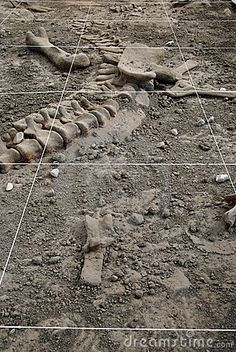 Participate in an Archeological Dig.