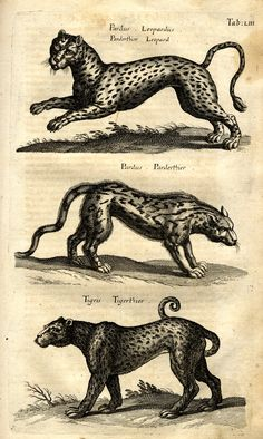 Jonston, Jan: Historiae Naturalis De Quadrupedibus Libri. - Frankfurt <Main>: Merian, 1652 [?].
