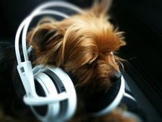 Your DJ Yorkie is taking requests