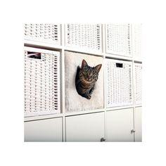 Katzenhöhle für IKEA-Regale Kallax oder Expedit