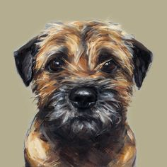 Fab Border Terrier print, really captures the 'I'm starving/please let me out/I want something' expression!