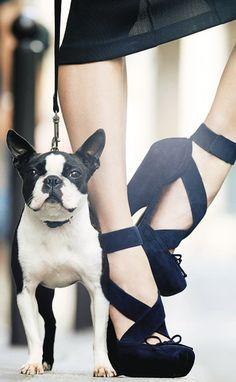 Escarpins façon chaussons de danse en veau velours, Dior. Avec le Boston Terrier mignon, parfait.
