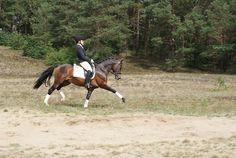 Cindy's Chevy Stallion sectie WPBR