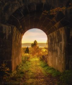 Into the Light by  Ann Thomstad