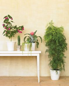 Ready to Move? Moving houseplants can be tricky! Use these tips to keep them safe during transport.