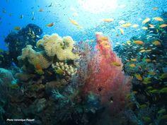 Diving. El Gouna, Egypt