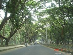 a canopy of old, old trees . Old Trees, Karnataka, Canopy, Places Ive Been, Software, Spices, Country Roads, Tours, India