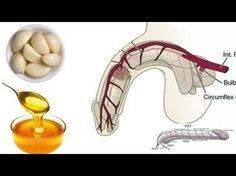 Why Garlic and Honey Good for Men? Garlic Health Benefits Raw Honey Benefits I HealthPedia I Garlic Garlic Health Benefits, Honey Benefits, Health And Beauty, Health And Wellness, Health Tips, Health Care, Tantra, Herbal Remedies, Health Remedies