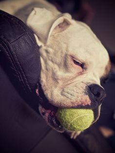 You're feeling sleepy... #Boxer