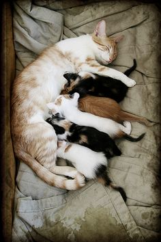 Oh, the sweet smell of a nursing cat and her kittens.