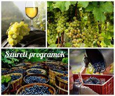 Indulnak a balatoni szüreti programok! Összegyűjtöttünk nektek egy csokorral belőlük #szüret #Balaton #autumn #fall #grape #szőlő