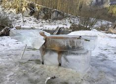 A hunter in Germany has put on show a block of ice containing a fox that he says fell into the chilly Danube and drowned, in what he calls a warning of the dangers of the icy river. Franz Stehle told news agency dpa on Friday that the block. Dom Quixote, Spiegel Online, Danube River, Wild Boar, Macabre, Barack Obama, Cool Photos, Amazing Pictures, Images