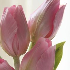 Use Naomi Yamamoto's Multi-Flower Petal Cutter Set 2 to create stunning tulips just like this one