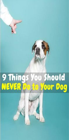 Worst Things You Can Do To Your Dog Keep Dog Healthy Dog Obedience Training Dog Health Tips Pet care Dog Training Methods, Basic Dog Training, Dog Training Techniques, Training Your Puppy, Training Dogs, Potty Training, Agility Training, Dog Agility, Brain Training