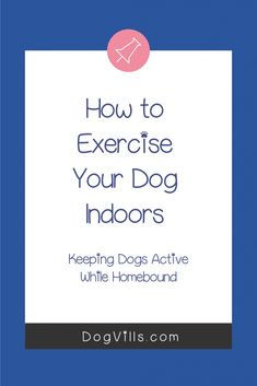 Exercising your dog indoors when you're homebound isn't hard.   These 7 ideas make exercising your dog indoors so much easier than you'd think.