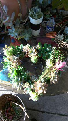 My first wreath was a success. A living beautiful work of art. Heart succulent wreath.