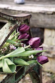 tulips in my favorite color Purple Tulips, Purple Haze, Shades Of Purple, Plum Purple, Deep Purple, Black And White Pictures, Black And White Colour, White Art, Color Splash