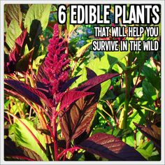 6 Edible Plants that Will Help you Survive in the Wild
