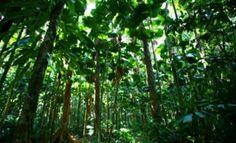 Τα κακά νέα είναι ότι έχουν μείνει τα μισά δέντρα στη Γη ,  αφότου εμφανίστηκαν οι άνθρωποι σε αυτήν .  Εκτιμάται ότι έχει χαθεί το  46 %...