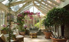 jardin-d'hiver-coin-detente-plantes-sympas-baie-vitree