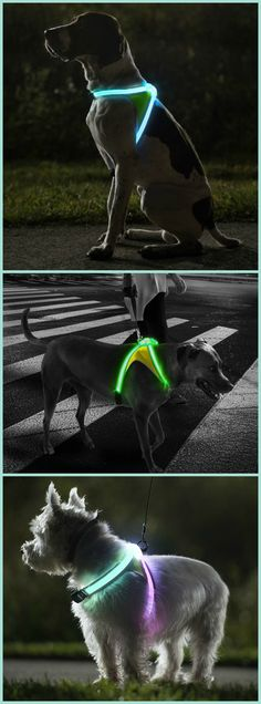 LightHound – Revolutionary Illuminated and Reflective Harness for Dogs. #affiliate
