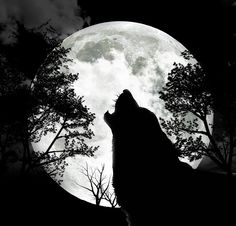 Howling at the moon.......