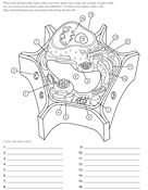 Ask A Biologist, tons of coloring pages for all stuff science related, for nephews as well