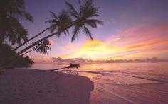 Atardeceres púrpuras en Faafu Atoll, la perla perdida del Océano Índico! #Maldivas #atardecer #Islas
