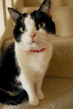 karappo cybergata via swedish cat mafia sus w lovables