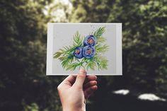 Gin Botanicals: Juniper Plant Watercolour Art Print Limited   Etsy Watercolor Plants, Watercolour Art, Juniper Plant, Spirit Drink, Dolphin Art, Cursed Child Book, Gin, House Warming, Doodles