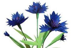 kwiaty z bibuły - chabry