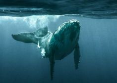 The Whale Whisperers: How A Mutual Respect On Instagram Connected Two Photographers