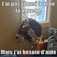 Laisser le chat une heure tout seul... http://www.15heures.com/photos/rR6b #LOL