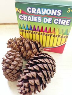 DIY Pine Cone Fire Starter Supplies