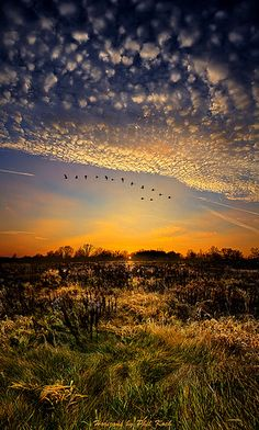 Sunset Lullaby  From the Horizon series.  I like the geese inthe sky forming a V formation.