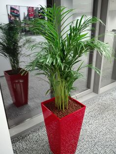 Great office plants in great containers. Office Plants, Container Plants, Planter Pots, Interior Design, Red, Nest Design, Home Interior Design, Interior Designing, Home Decor