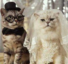 Sizce de dünyanın en tatlı gelin ve damadı değiller mi? #hayvangiysileri #hayvanlar #kedi #köpek #cat #dog