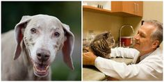 It's Senior Pet Appreciation month at Animal Medical and Surgical Center - For a limited time $343.00 of services for $189.00! That's $154 in SAVINGS!