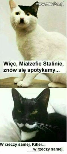 Hitler I ktoś tam😏 Animals And Pets, Funny Animals, Cute Animals, Kittens Cutest, Cute Cats, Wtf Funny, Hilarious, Funny Mems, Man Humor