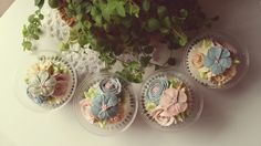 cup cake package